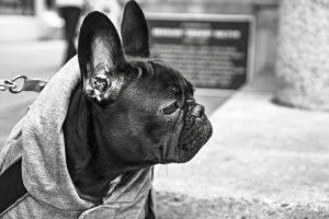 Welke Bulldog soorten zijn er?
